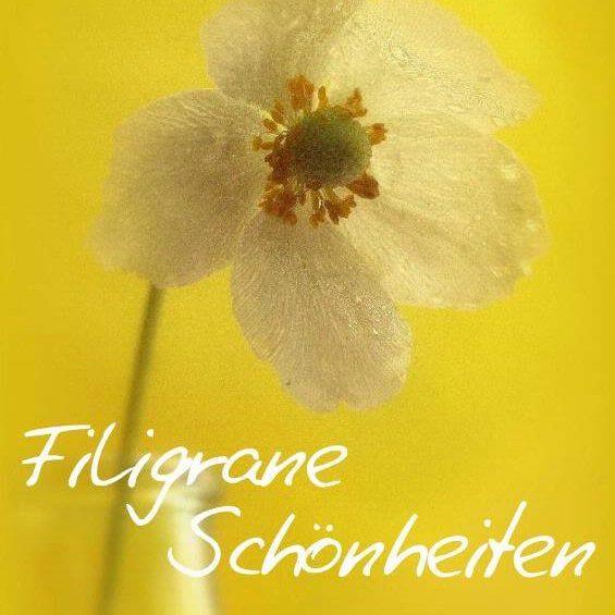 Filigrane Schönheiten - Kalender