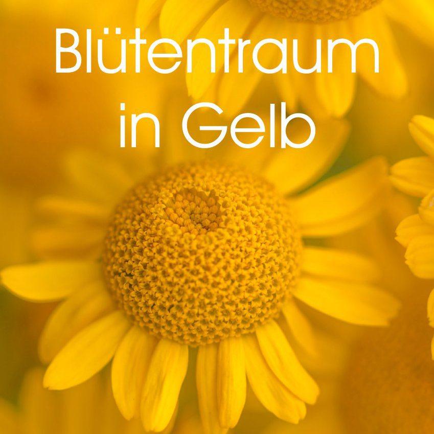 Blütentraum in Gelb - Familienplaner