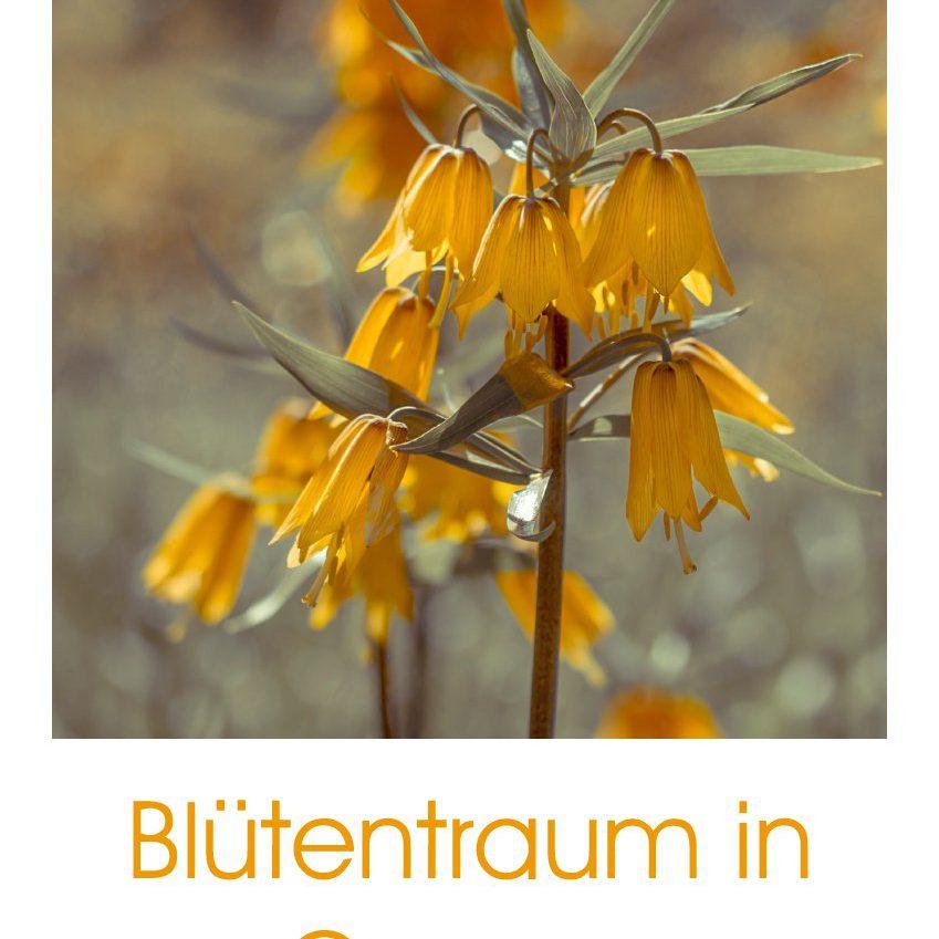 Blütentraum in Orange - Geburtstagskalender