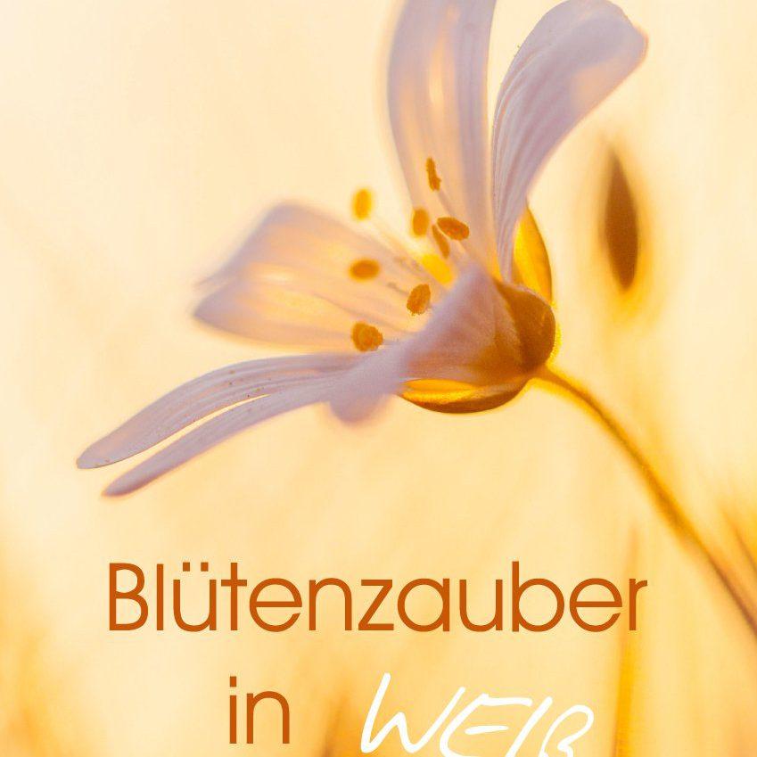 Blütenzauber in Weiß - Familienplaner