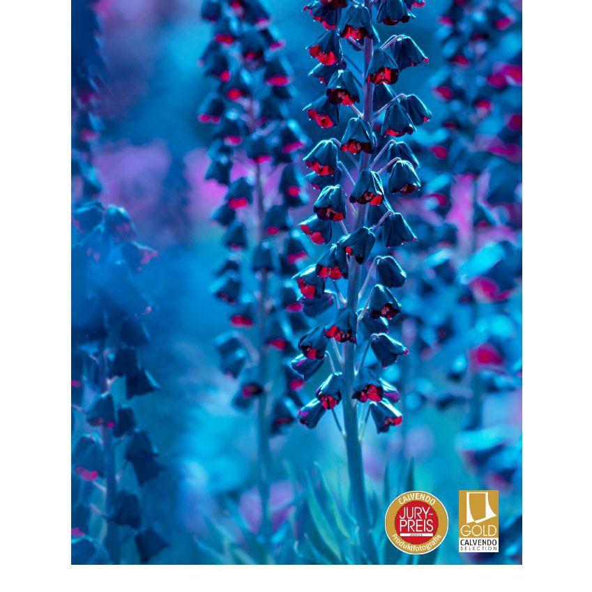 Blauer Blütenzauber - Kalender