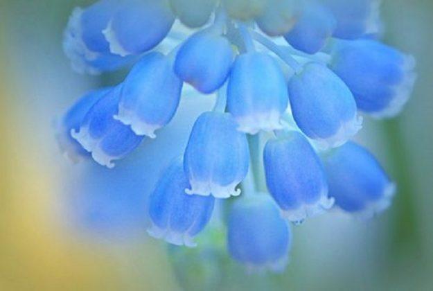 Blauer Traum - Leinwand