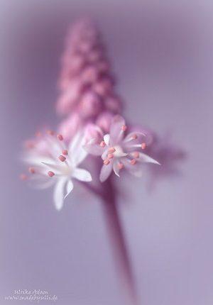 Frühlingsblumen Vorschaubild