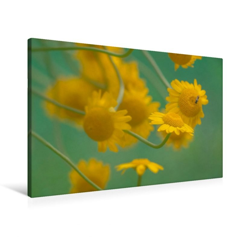 Gelbe Magerite - Leinwand