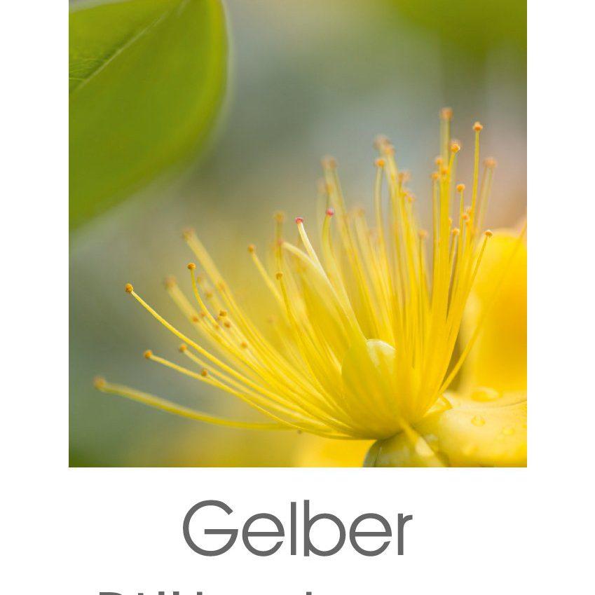 Gelber Blütentraum (Kalender)