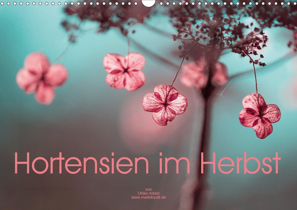 Hortensien im Herbst - Kalender