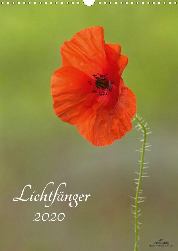 Lichfänger - Kalender