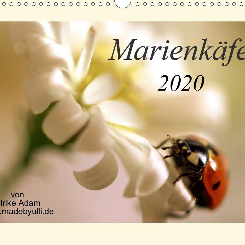 Marienkäfer - Kalender