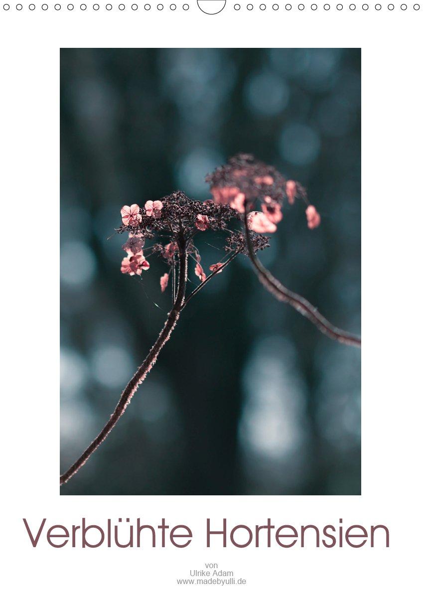 Verblühte Hortensien (Planer)