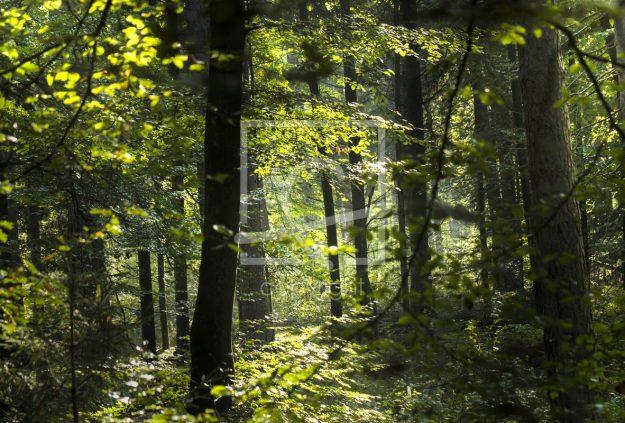 Grüner Wald (Stockfoto)