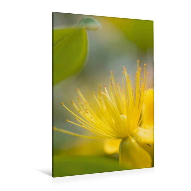 gelber Blütentraum - Leinwand